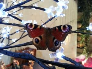 crechesdenosvillages2013-arbrelumineux-papillon