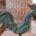 Brenouille Coq gaulois LELU
